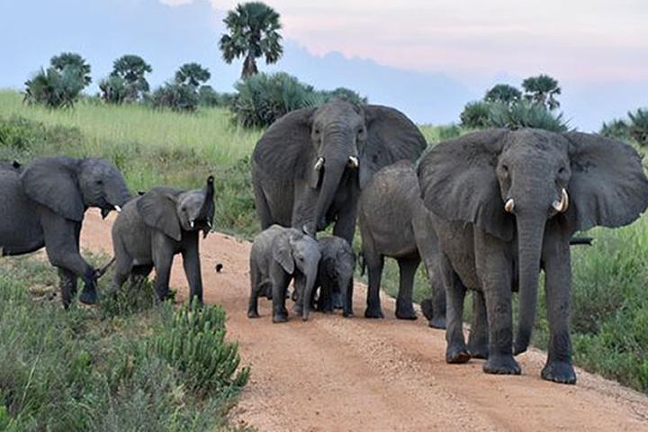 Stray Elephants